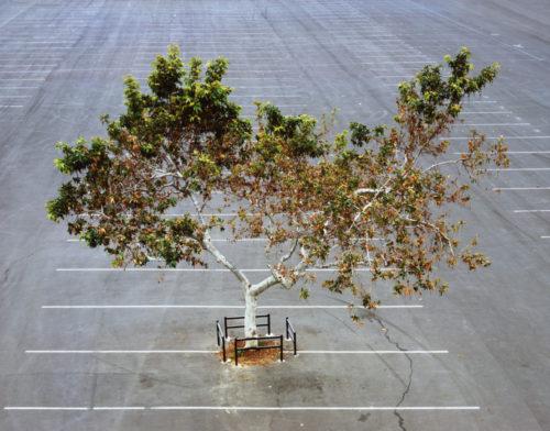 Joel Tauber | My Lonely Tree